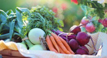 agriculture-basket-beets-bokeh-533360